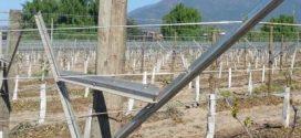 Posviman presenta en Agroexpo el sistema de conducción de uva de mesa OPEN GABLE