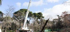 Transgruma realiza un trabajo de elevación en el Parque del Retiro