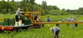 Voluntarios de la planta de tractores Case IH en Racine, en el Impact Day
